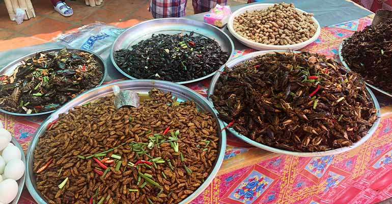 Fried bugs in Cambodia
