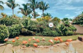 Flamingos in the Bahamas
